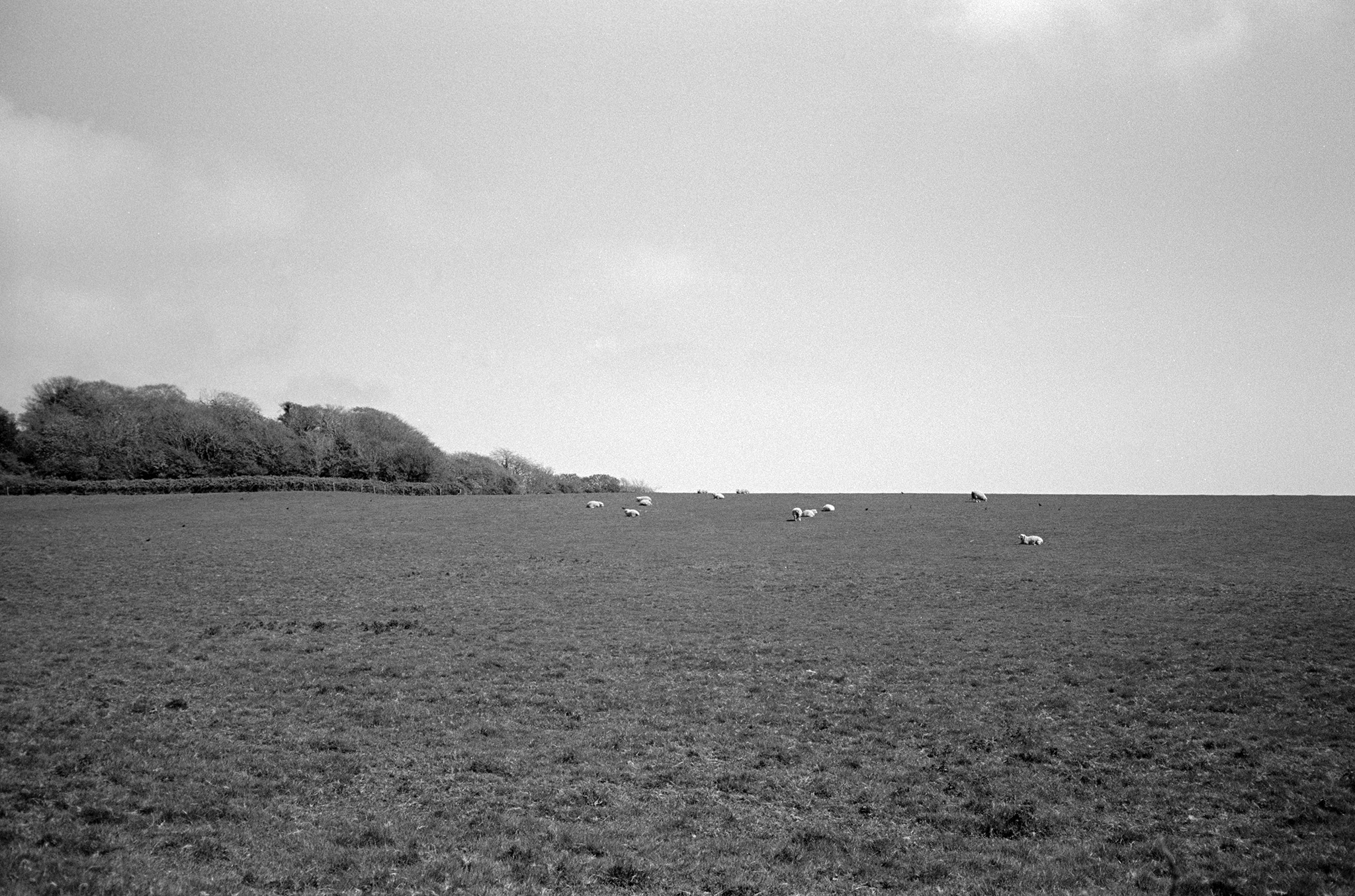 Adox Silvermax 100 Film Review Shot on a Contax T3