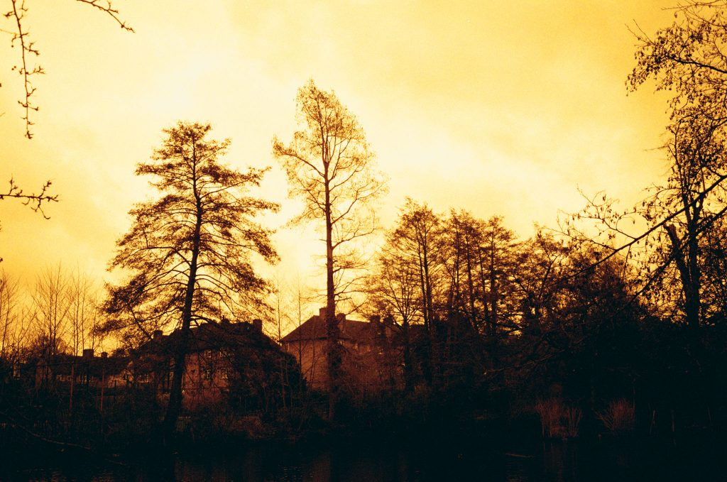 Here is our Redscale Kodak ColorPlus 200 Film Review. Trees against sky