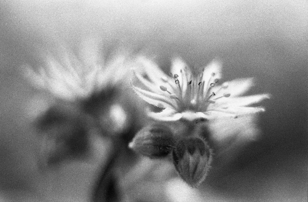 Fomapan 400 shot by @the_real_p_fiddy