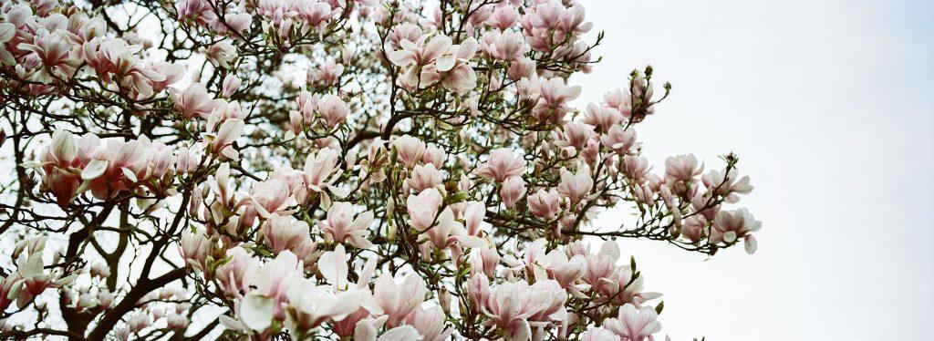 Kodak Portra 160 35mm Blossom