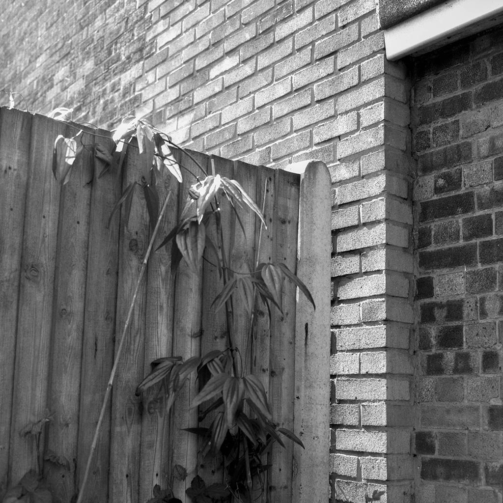 Ilford Ortho Plus 120 Film Plant Wall