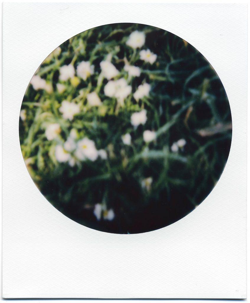 Out of focus daisies on Polaroid 600 film.
